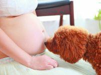 妊娠中に犬にお腹を踏まれた!蹴られた!胎児に影響はない?
