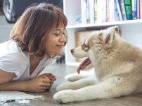妊娠中に犬から「トキソプラズマ」に感染する危険はある?