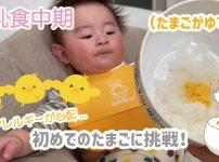 離乳食の卵